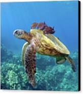Sea Turtle Underwater Canvas Print by M.M. Sweet