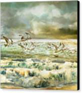 Seagulls At Sea Canvas Print by Anne Weirich