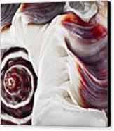 Seashell Detail Canvas Print by Elena Elisseeva