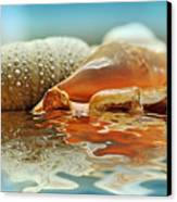 Seashell Reflections On Water Canvas Print by Kaye Menner