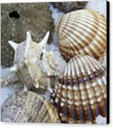 Seashells Canvas Print by Frank Tschakert