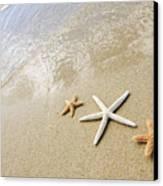 Seastars On Beach Canvas Print by Mary Van de Ven - Printscapes