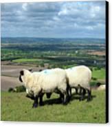 Sheep At Westbury Tor Canvas Print by Kurt Van Wagner
