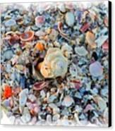Shells Canvas Print by Judy  Waller