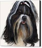 Shih Tzu Canvas Print by Jimmie Trotter