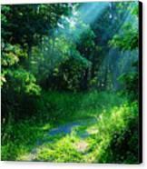 Shining Light Canvas Print by Thomas R Fletcher