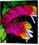 Shrimp Plant Canvas Print by Judi Bagwell