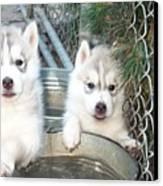 Siberian Husky Puppies Canvas Print by Jean Gugliuzza