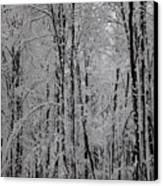 Silence Of Winter Canvas Print by Gabriela Insuratelu