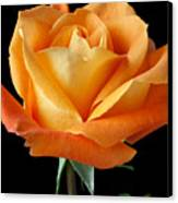Single Orange Rose Canvas Print by Garry Gay
