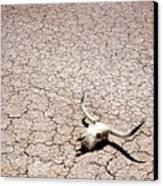 Skull In Desert Canvas Print by Kelley King
