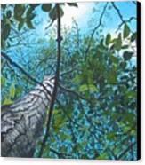 Skyward Canvas Print by William  Brody