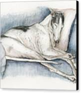Sleeping Greyhound Canvas Print by Charlotte Yealey