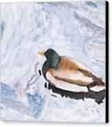Snake Lake Duck Sketch Canvas Print by Ken Powers