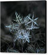 Snowflake Of 19 March 2013 Canvas Print by Alexey Kljatov