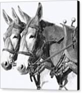 Sorrel Mule Team Canvas Print by Bethany Caskey