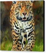 South American Jaguar Canvas Print by David Stribbling