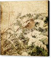 Sparrow In Winter I - Textured Canvas Print by Angie Tirado