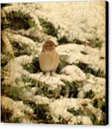 Sparrow In Winter II - Textured Canvas Print by Angie Tirado