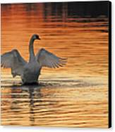 Spreading Her Wings In Gold Canvas Print by Randall Branham