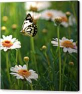 Spring In Air. Canvas Print by Photos by Shmelly