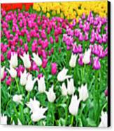 Spring Tulips Flower Field II Canvas Print by Artecco Fine Art Photography