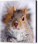 Squirrel Portrait Canvas Print by Mircea Costina Photography