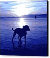 Staffordshire Bull Terrier On Beach Canvas Print by Michael Tompsett