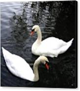 Stanley Park Swans Canvas Print by Will Borden