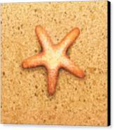 Star Fish Canvas Print by Katherine Young-Beck
