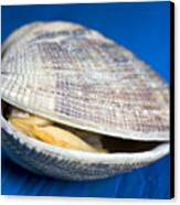Steamed Clam Canvas Print by Frank Tschakert
