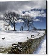 Stone Fence, Weardale, County Durham Canvas Print by John Short
