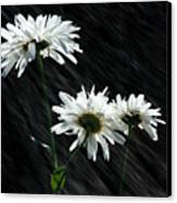 Summer Showers Canvas Print by Barbara  White