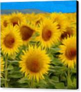 Sunflowers In The Field Canvas Print by Jeff Kolker