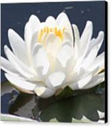 Sunlight On Water Lily Canvas Print by Carol Groenen