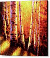 Sunlight Through The Aspens Canvas Print by David G Paul