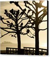 Sunrise Trees Canvas Print by Tom Rickborn