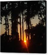 Sunset In The Woods Canvas Print by Kimberly Camacho