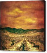 Sunset Over Vineyard Canvas Print by Jill Battaglia