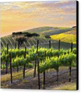 Sunset Vineyard Canvas Print by Sharon Foster