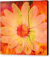 Surprise Me Canvas Print by Susanne Van Hulst