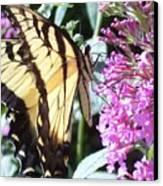 Swallowtail Canvas Print by Anna Villarreal Garbis