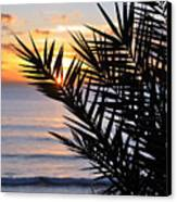 Swamis Palm Canvas Print by Kelly Wade