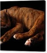 Sweet Dreams Puppy Canvas Print by Angie Tirado-McKenzie