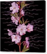 Sweet Smell Of Spring Canvas Print by Debra     Vatalaro
