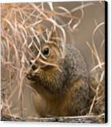 Tall Grasses Make Up A Fox Squirrels Canvas Print by Joel Sartore