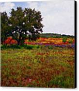Texas Wildflowers Canvas Print by Tamyra Ayles