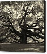 The Angel Oak Canvas Print by Susanne Van Hulst