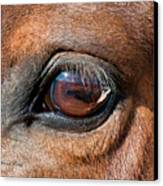 The Equine Eye Canvas Print by Terry Kirkland Cook