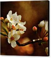 The Fleeting Sweetness Of Spring Canvas Print by Lois Bryan